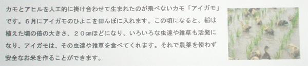 会津より「アイガモ米(無農薬栽培)」.