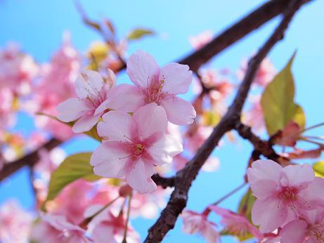 2011年 春