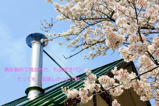 煙突の煙と満開の桜