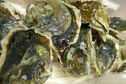 隠岐の岩牡蠣.jpg