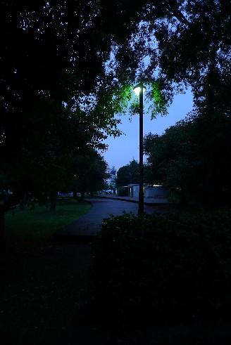 潮風公園の林.jpg