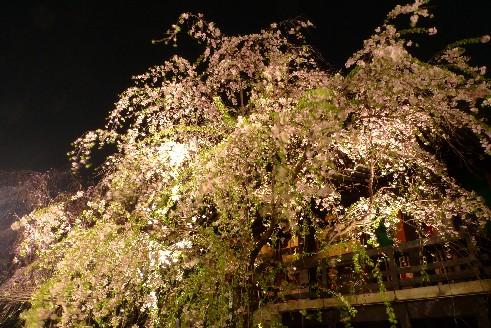 南蔵院本堂前.jpg