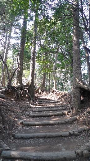 高尾山の山道.jpg