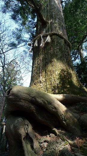 蛸杉.jpg