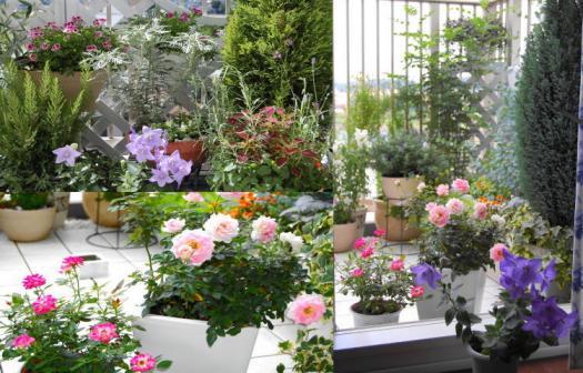 my garden1.jpg