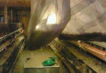 蚊取りマシーンで捕獲した大量の蚊