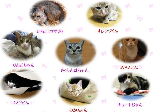 8匹の猫の自己紹介画像