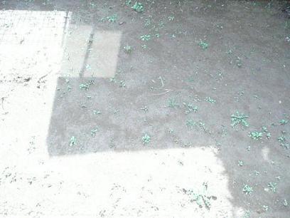 庭.JPG