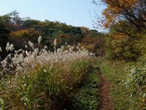 2009_hokone3.jpg