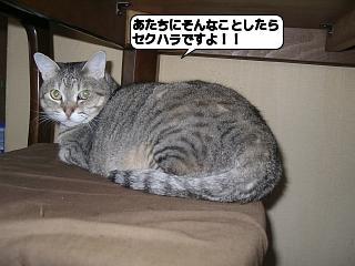 20110310_160354.jpg