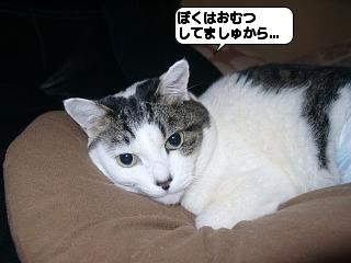 20110310_160621.jpg