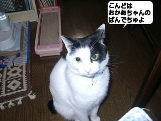 20110310_160834.jpg