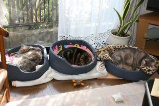 日当りのいい窓際で昼寝する3匹