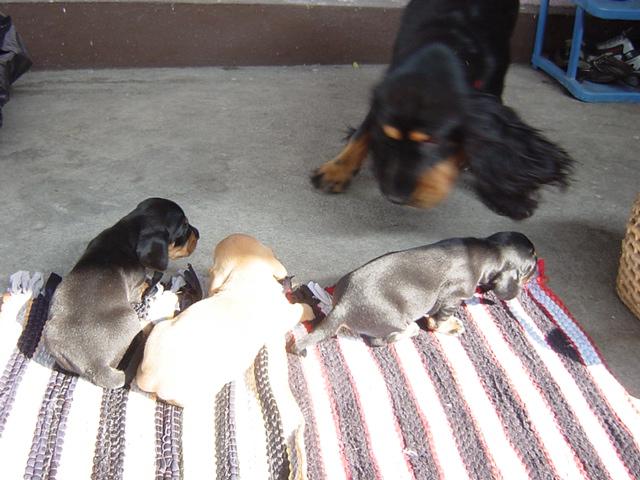 前庭と犬4