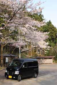 桜とHOBIO