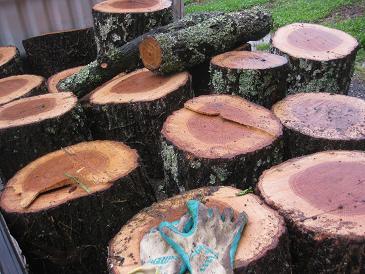 椎茸のコナラ原木