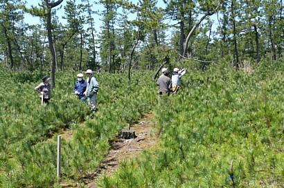 帯状伐採区