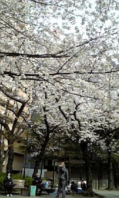 桜2xxx-xxx-xxxxx