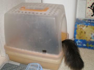アリオンが新しい猫砂をモニター中