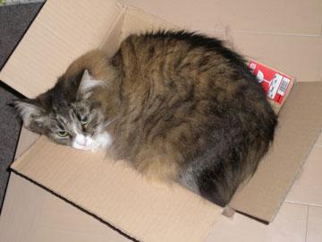 折角ニャンで、送られて来た箱もモニターしてみたミャ