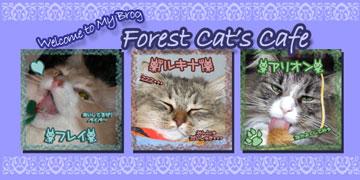 ForestCatsCafe