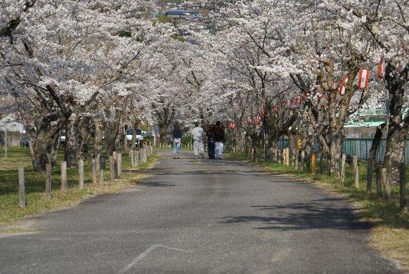 松島さくら