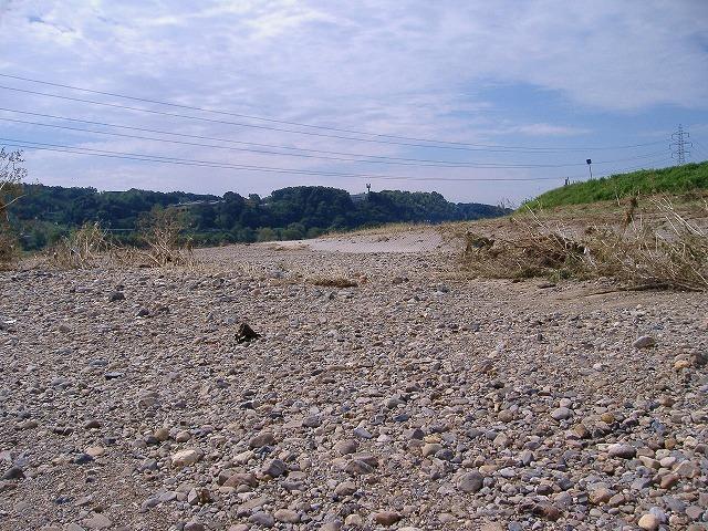 土岐石の採取現場(庄内川)