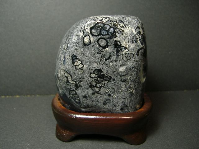 金生山 化石