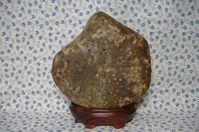 土岐石紋石&インドローズの台
