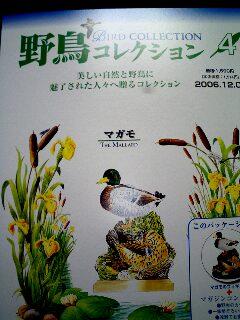 0612021709野鳥