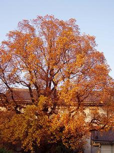 autumn2005