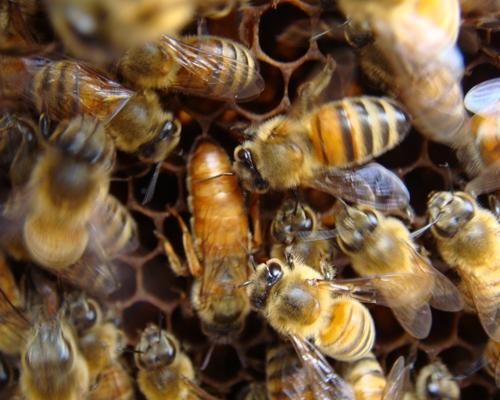 黄色と黒 | JINさんの陽蜂農遠日記 - 楽天ブログ