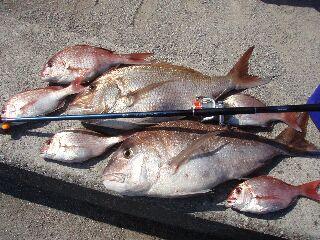10月9日真鯛75、76 5キロ.jpg