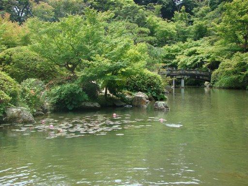 池7.jpg