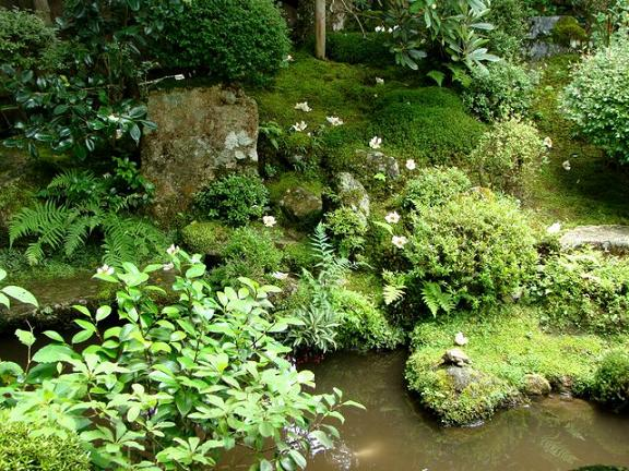 25 鶴亀庭園3 散る夏椿.jpg