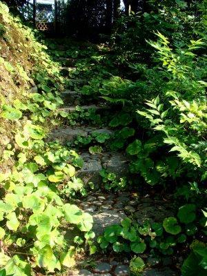 6 garden step.jpg