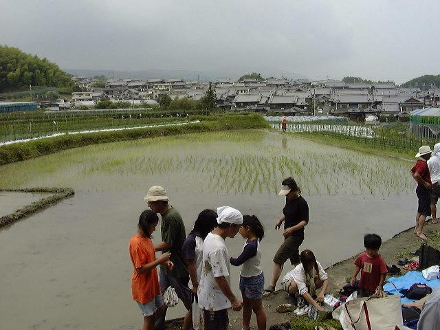 2005奈良田植え