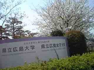 県立広島大学の桜