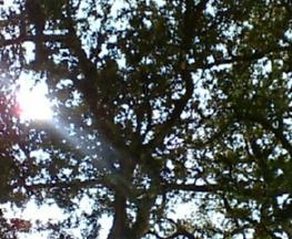 銀閣寺の木漏れ日