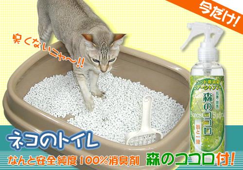 今だけ猫トイレ.jpg