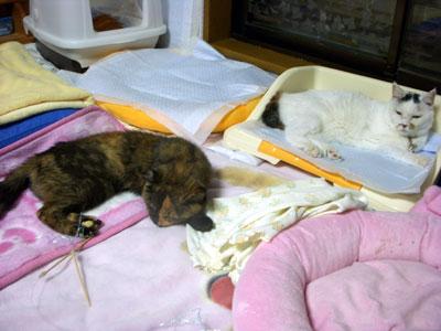 8-15-17-satsuki&toto.jpg