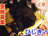 ひじきバナー