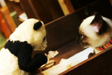 パンダと猫のにらめっこ
