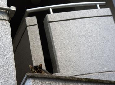 こんなとこにも子猫