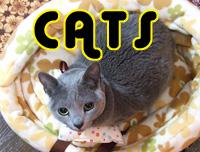 catsTOP
