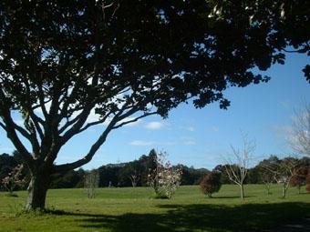 NZflower5.jpg