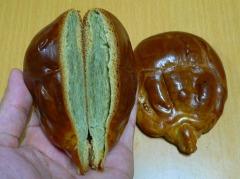 カブトガニ饅頭(玉利軒さん)