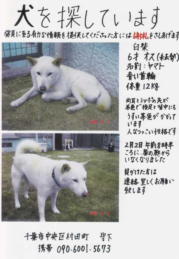 IMG-迷い犬.jpg