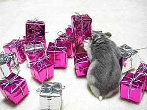 ムーン君プレゼント