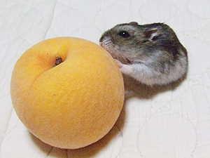桃とマロンちゃん